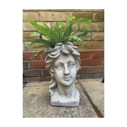 Classic Roman Goddess Head Planter With Air Purifying Fern