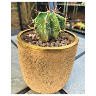 Gold Effect Glass Cactus Planter