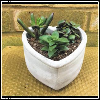 Hart Shape Sacculent Planter