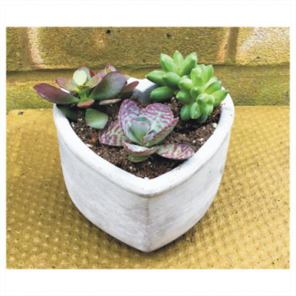 Heart Shape Succulent Planter