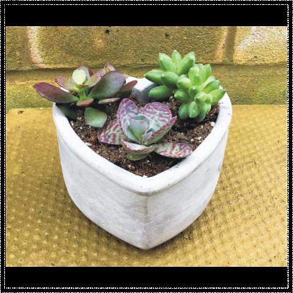 Heart Shape Succulent Planter