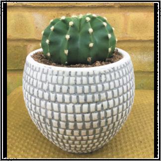 Large Mosaic Effect Cactus Planter