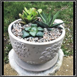 Large Tea Cup Succulent Planter
