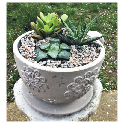 Large Tea Cup Succulent Planter