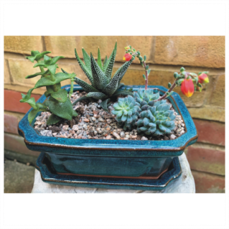 Rectangular Green Glaze Terracotta Succulent Planter