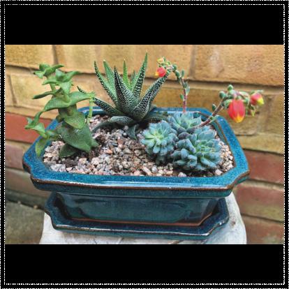 Rectangular Green Glaze Terracotta Succulent Planter
