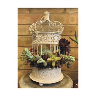 Romantic Birdcage With Assorted Succulents Nest