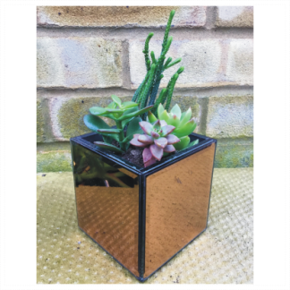 Small Square Mirror Succulents Planter