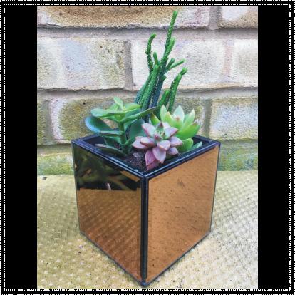 Small Square Mirror Succulents Planter