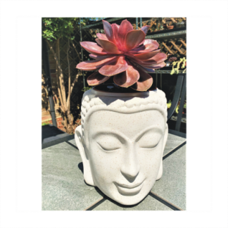 White Ceramic Buddha Head Planter with Echeveria 'Purple Pearl'