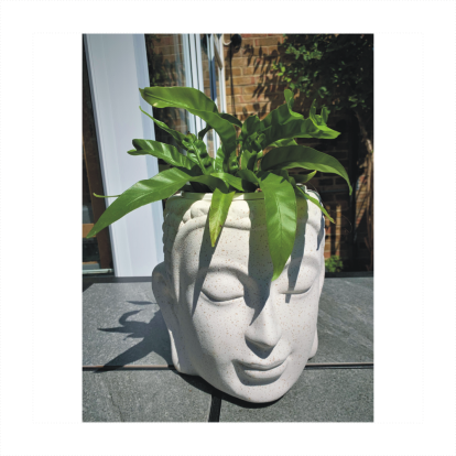 White Ceramic Buddha Head Planter with Asplenium Fern