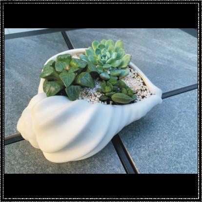 White Ceramic Sea Shell Succulent Planter