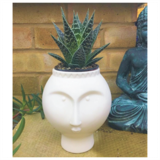 White Face Ceramic Aloe Planter