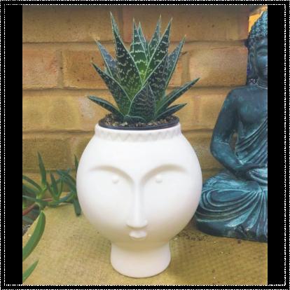 White Face Ceramic Aloe Planter