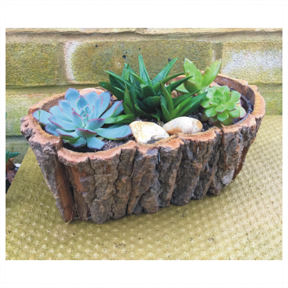Wooden Oval Succulent Planter